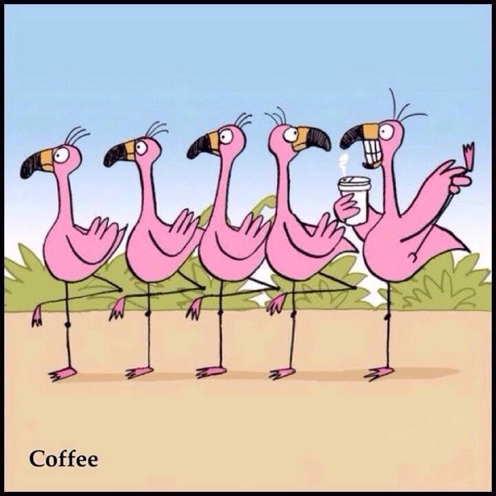Flamingo on Coffee | Awesome!!! | Pinterest | Coffee ... - photo#31