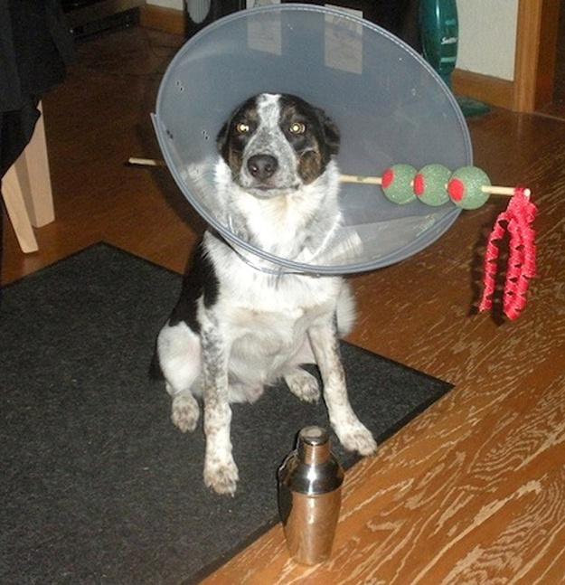 69 best cone of shame images on pinterest animal jokes funny diy dog costume diy dog halloween costume diy pet halloween costume diy pet costume martini glass dog costume looks like solutioingenieria Images