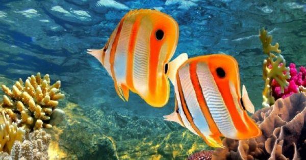 Le gouvernement australien veut accorder un prêt d'1 milliard de dollars à un complexe charbonnier près de la Grande barrière de corail, menaçant l'habitat des tortues de mer et d'autres espèces! Stoppons ce projet insensé -- signez ici.