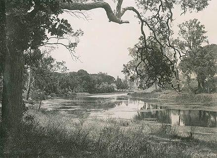 Parramatta river in Parramatta Park