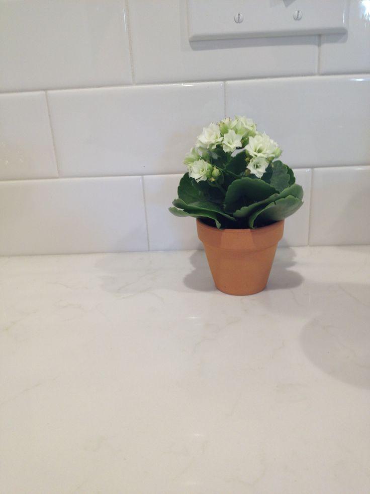 Pental Quartz Lattice White Kitchens Pinterest