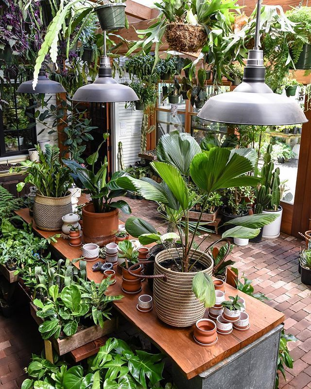 Our Ever Evolving Solarium So Dear To Our Hearts Plants Indoor Plants House Plants Indoor