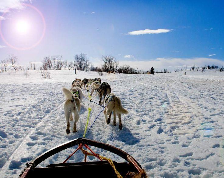 Dog Sledding - Norway http://www.regent-holidays.co.uk/country/norway-holidays/