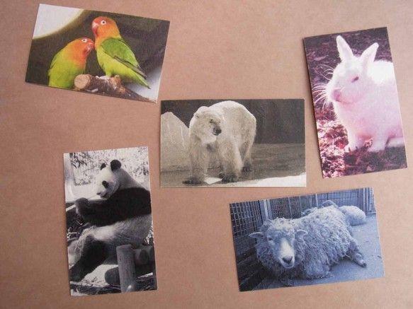 和紙で作った「名刺香」5枚セットです。動物園のような、シロクマ、パンダ、ウサギ、インコ、ヒツジの5種類を揃えました。名刺香というのは、カードケースの中に入れて...|ハンドメイド、手作り、手仕事品の通販・販売・購入ならCreema。