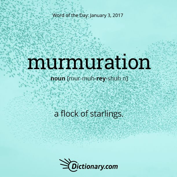 Dictionary.com's Word of the Day - murmuration - a flock of starlings.