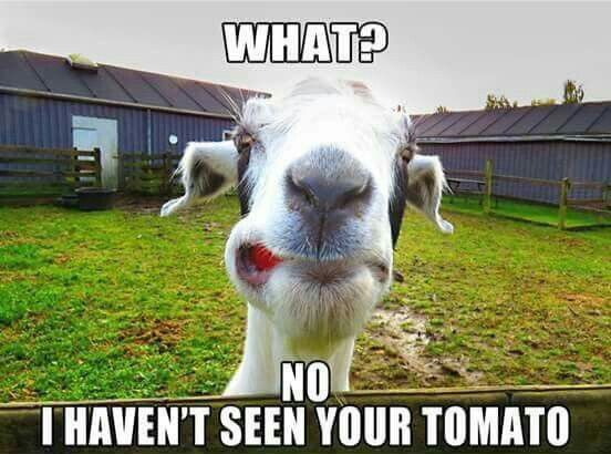 fd2d0fd31eb4d701753d8e4c83d639ad 162 best all things goats images on pinterest animales, baby
