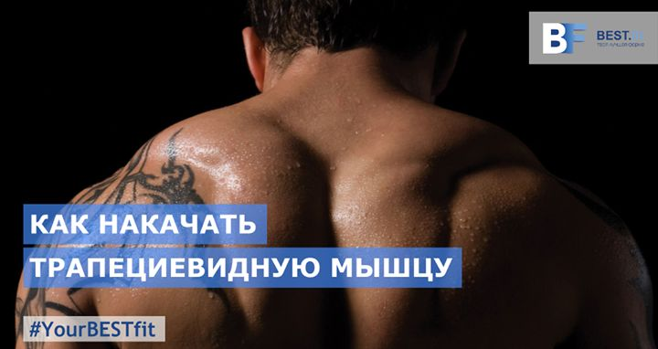 КАК НАКАЧАТЬ ТРАПЕЦИЕВИДНУЮ МЫШЦУ  Анатомия трапециевидных мышц разделяющихся на верхние средние и нижние пучки позволяет задействовать их практически во всех упражнениях. Так упражнения на дельтовидные мышцы плеча - и базовые и изолированные - волей-неволей вовлекают в работу и трапеции. Именно по этой причине часто тренинг трапеций проводят сразу после тренировки дельтоидов. Если обе группы мышц - плечи и трапеции - тренировать в один день то трапециям лучше отводить вторую очередь…