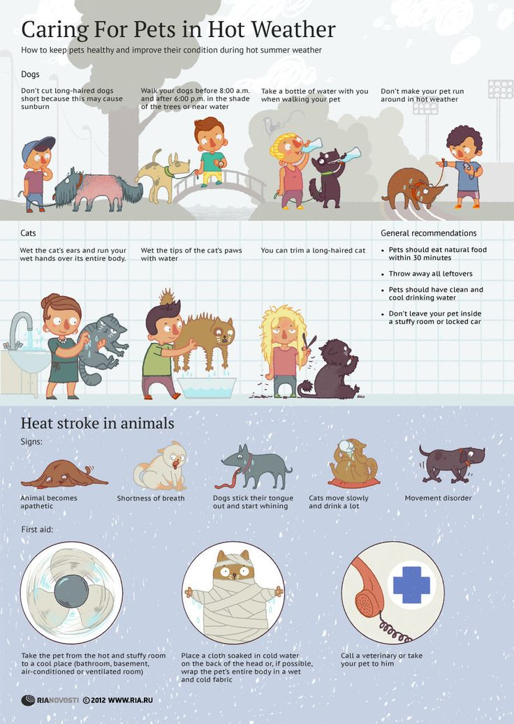 Caring For Pets in Hot Weather | Infographics | RIA Novosti
