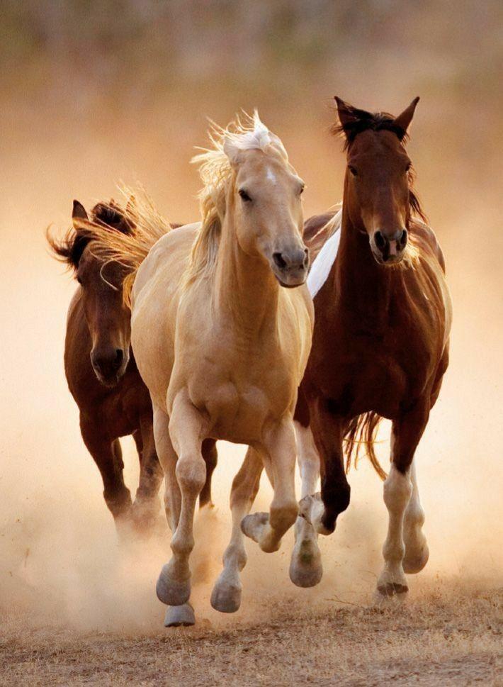 Картинки на телефон лошади