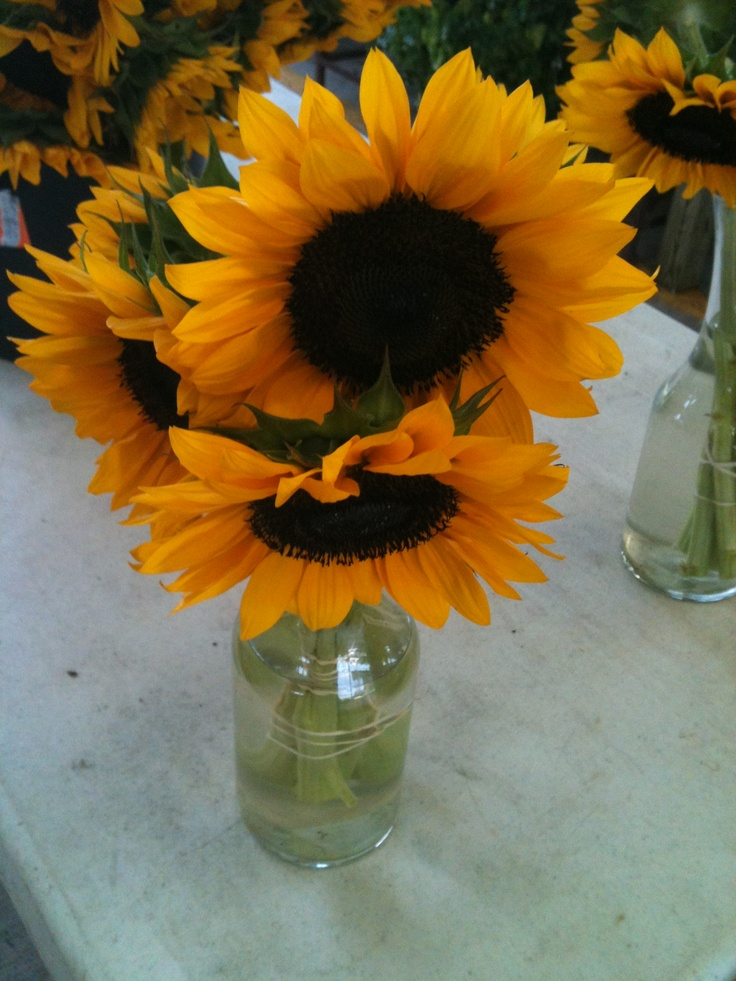 Sunflowers, Greensboro Farmers Market #GSO BentTuba.com