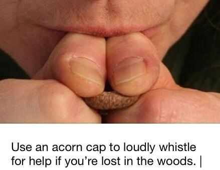 Acorn top to whistle with