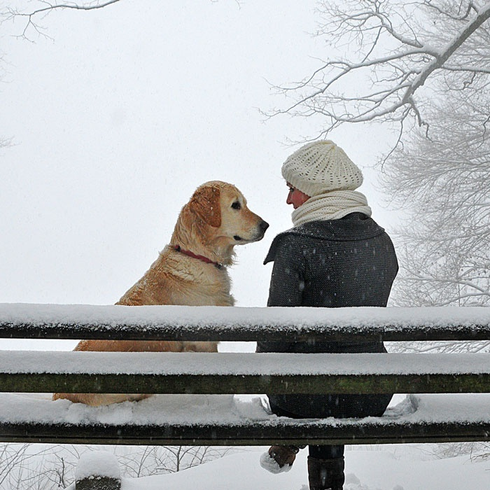 snowy bench buddies# dog#