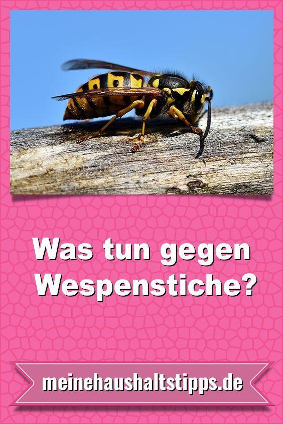 Was Tun Gegen Wespen Hausmittel