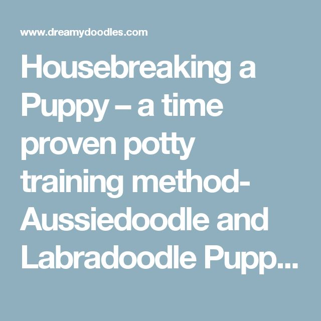 Housebreaking a Puppy – a time proven potty training method- Aussiedoodle and Labradoodle Puppies   Best Labradoodle Breeders in Washington State, Portland, Oregon
