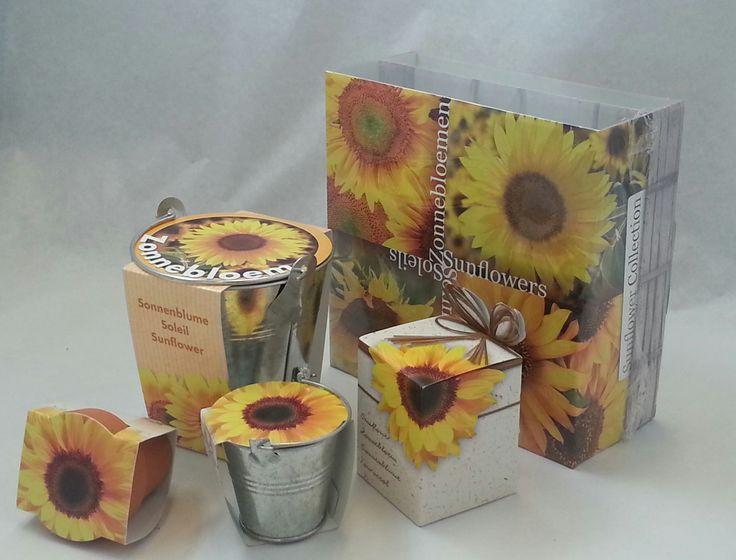 Wilt de zon in huis halen? Het kan met zonnebloemen, zelf zaaien en zelf kweken.