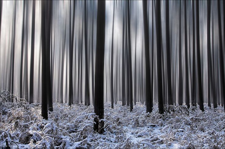 Forest and snowBlack Forests, Black Trees, Winter Trees, Awesome, Winter Wonderland, Bart Ceuppen, Awe Inspiration Photography, Winter Forests, Art Photos