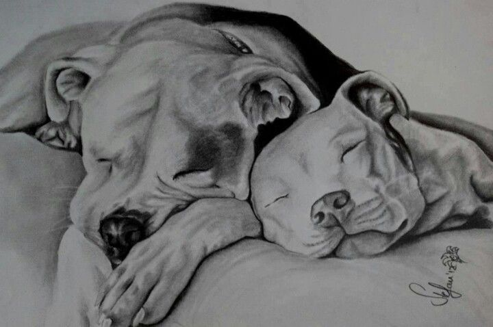Pit bull drawing -- really captures the sweet spirit of the breed ^_^