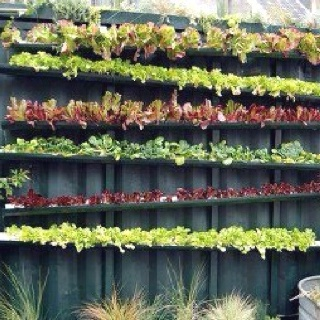 Space-saving vertical garden strategy! Slanting the gutters will allow for automatic watering of all the gutter gardens, as well as drainage of excess rainfall. Stacked on top of a reflective or black background will increase the plants' growth rate (black boosts heat.....mirror boosts photosynthesis).