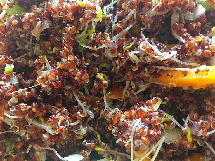 Ensalada de Quinoa Roja y Brotes de Alfalfa, muy rica y llena de colores y sabores, el aliño es delicioso!
