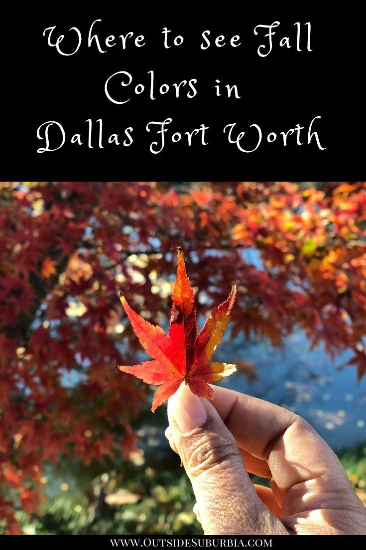 Fall Colors In Dallas Fort Worth Travel Usa Us Travel Destinations Usa Travel Destinations