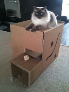 How To Build An Easy Cat House   Google Search