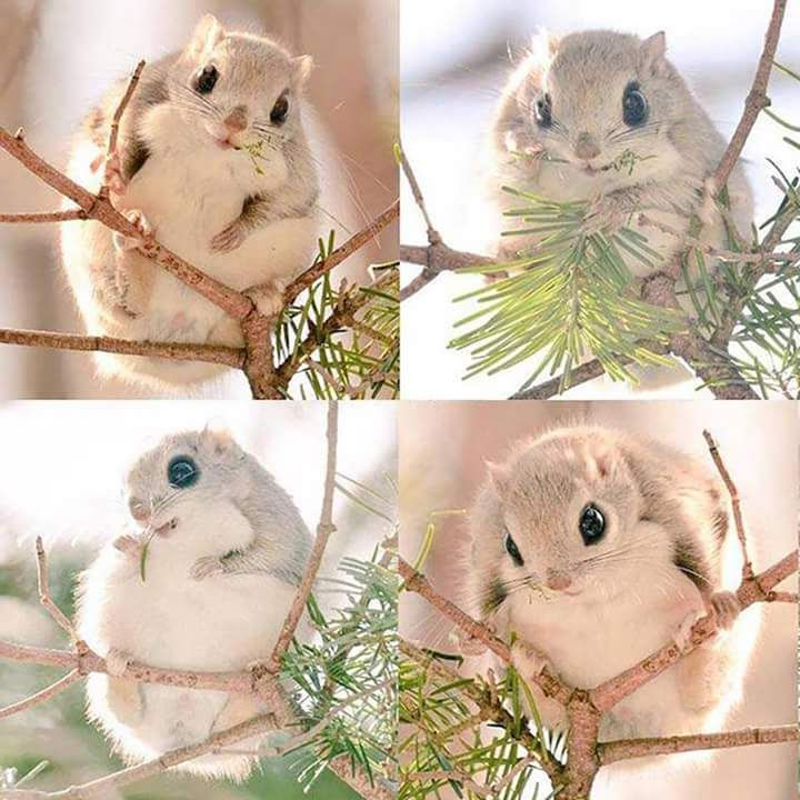 These little guys can only be found on Hokkaido, one of Japan's most unspoiled islands - Imgur