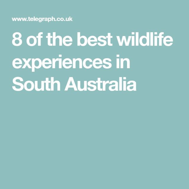8 of the best wildlife experiences in South Australia