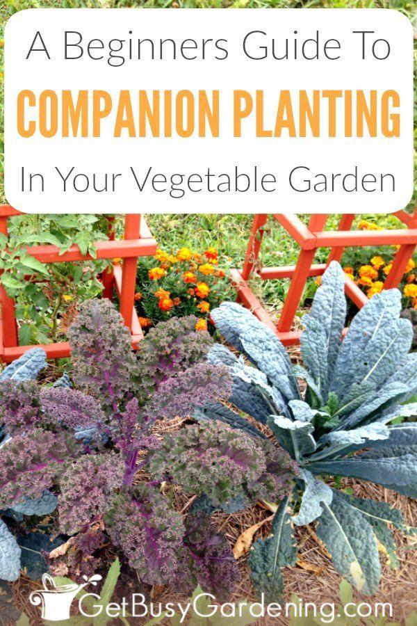 fd3044e2cdbcf3b6c8ec3f6b8751e74e - Companion Planting The Beginner's Guide To Companion Gardening