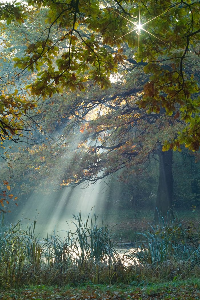 Wow.Forests, God, Sun Ray, Nature, Beautiful, Trees, Places, Heavens, Mornings Lights