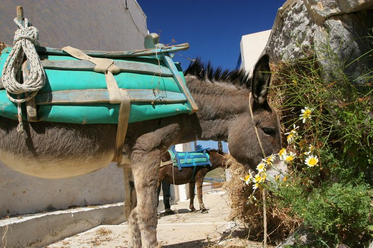 Travel Photography Greece, Mykonos, Donkey