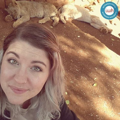 IWH Friday Feature! @telle_cat88 spent 2 weeks at the Save the Lions Project this time last year! The most unique experience I've ever had! Made some amazing new friends and got to immerse myself in South African culture making unforgettable memories. Take me back! #iwhtravel #volunteer  #travel #wunderlust #safari #explore #southafrica #africa #africa #animals #iwhvolunteer #wildlife