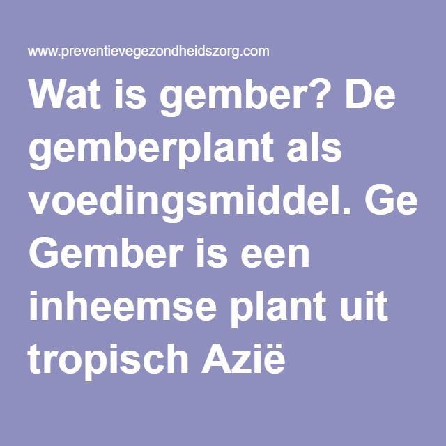 Wat is gember? De gemberplant als voedingsmiddel. Gember is een inheemse plant uit tropisch Azië