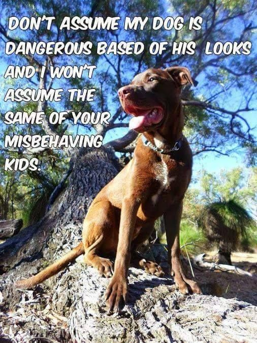 Non ci sono cani pericolosi ma uomini pericolosi