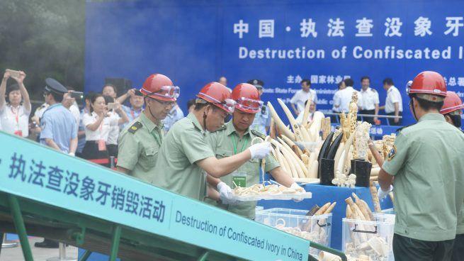 China prohibirá en 2016 el comercio de marfil cuyo mercado mundial domina