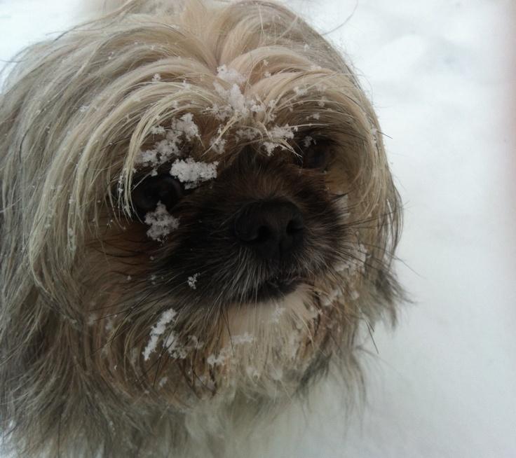 """""""Ung Yoyos fornemmelse for sne"""", """"Mr. Yoyo's Feeling for Snow"""" or """"Yoyo's Sense of Snow"""", """"Yoyo et l'Amour de la neige"""", """"Junger Yoyo Gespür für Schnee""""… Il Senso di Yoyo per la Neve. Foto di Maria Pia Boninsegna"""