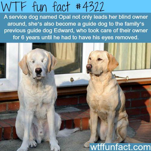 Pet scan fun facts