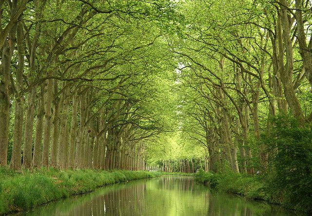 The Canal du Midi near Carcassonne, Aude, Languedoc-Roussillon-Midi-Pyrénées, France