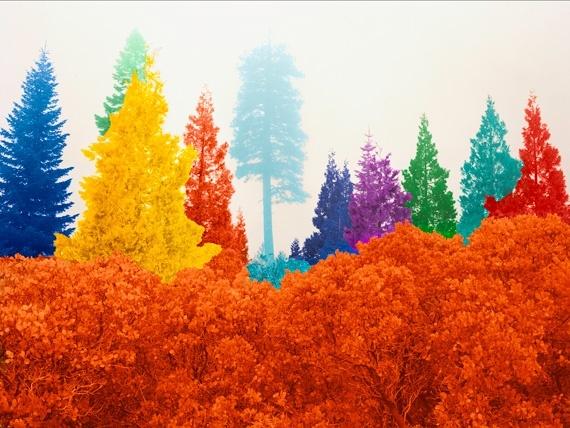 "David Benjamin Sherry, ""Manorathadayaks,"" 2010    Courtesy the Artist and Salon 94, New York: Colour, Neon Trees, Benjamin Sherri, The Artists, David Benjamin, Color, Rainbows, Fine Art Photography, Photo Galleries"