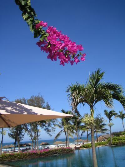 リゾート地としても人気の高いダナン。赤いブーゲンビリアが綺麗です。ダナン 旅行・観光のおすすめスポット!