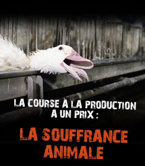 La course à la production a un prix : la souffrance animale, mais bon, passons. De toute façon c est pas très grave tant que c est pas nous... ( c est ironique )