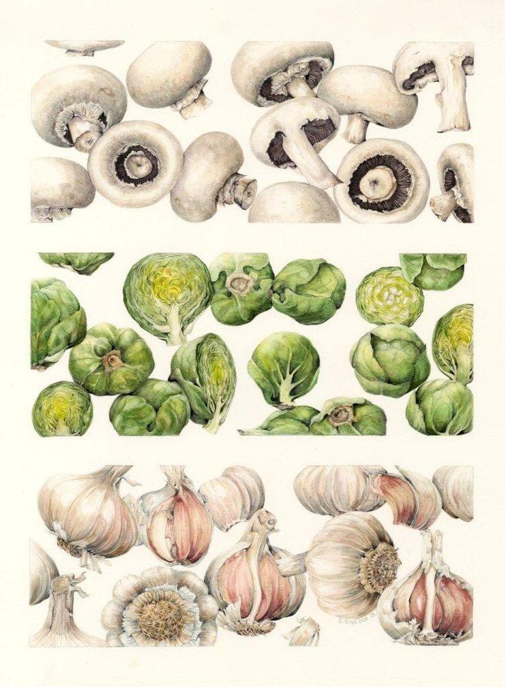 Botanical Art Original Watercolours on Paper or Vellum | Shirley Slocock