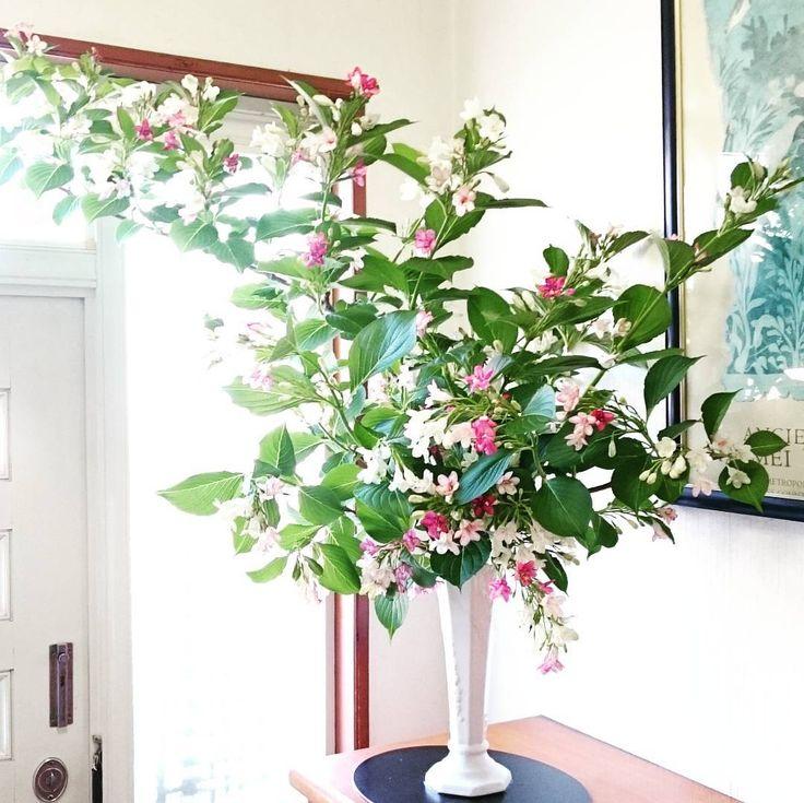 ハコネウツギを玄関に いけばな#華道 #ikebana #flowerstagram #flowerslovers #instaflowers #japan #art#artwork #beauty#bouquet #nature #naturelovers #flowerarrangement #garden#flowers #ハコネウツギ #ウツギ http://gelinshop.com/ipost/1517250831707514363/?code=BUOW5e7F6X7