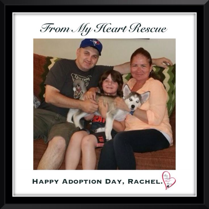 #Please ❤️+ #Pin #FromMyHeartRescue #RescueWithoutBorders #SavingOneDogAtaTime ~ #Happy #Adoption #Day #Rachel #Aka #Alaska *Many thanks to Sandra, Kathy, Cara and family for all their hard work behind the scenes. *Thank you❤️ *Info, Foster, Adoption, PayPal & e-transfer: frommyheartrescue@hotmail.com *Our Vets: Brock St. Animal Hospital/FMHR 905-430-2644 *Fundraising & Volunteering: FMHRfundraising@hotmail.com    *www.frommyheartrescue.com  *Find Us: Petfinder, FB, Twitter, Instagram, YT…
