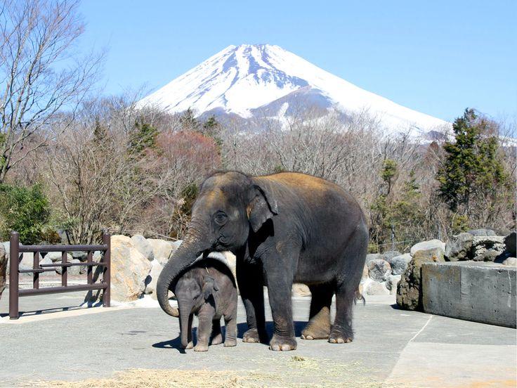 子供に大人気!たくさんの動物にあえる富士サファリパーク - Find Travel