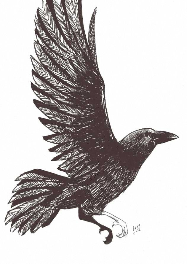 Ink drawing: Crow In Flight by ~Saiyagirl85 on deviantART