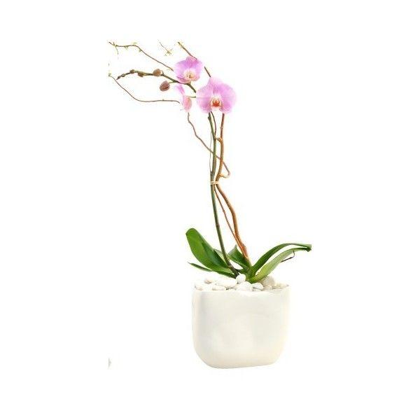 Stylish Orchids Arrangement