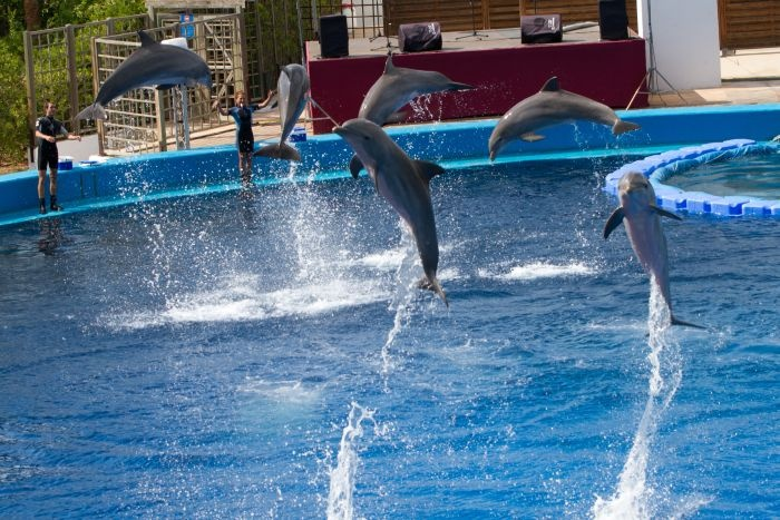 Dolphins show, LOceanografic, Valencia