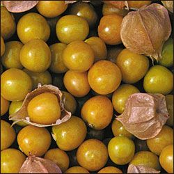 Aunt Molly's Ground Cherry. Easy to grow, prolific, and super sweet. Can be used for preserves, pies, over ice cream, or in fresh fruit salads.