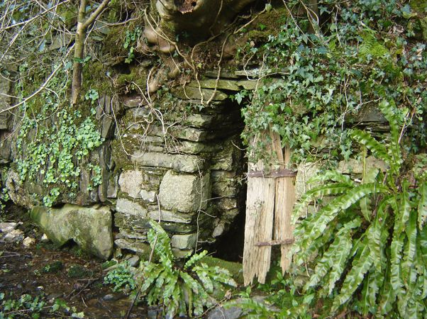 An old dipping-well built into a Cornish hedge near Callington, Cornwall.