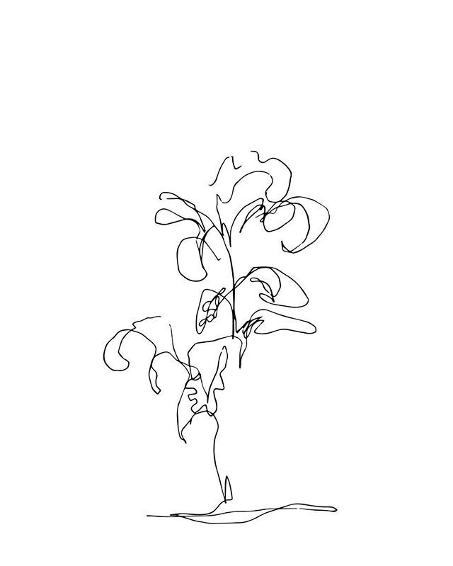 Contour Line Drawing Of A Plant : Best blind contour drawings images on pinterest